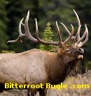 The Bitterroot Bugle